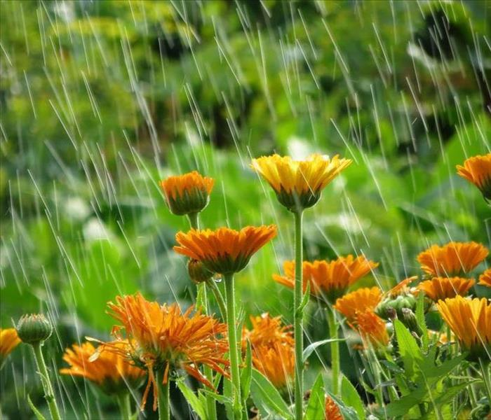 orange flowers with rain coming down